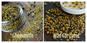 chamomile-vs-wild-chrysant-w-teks